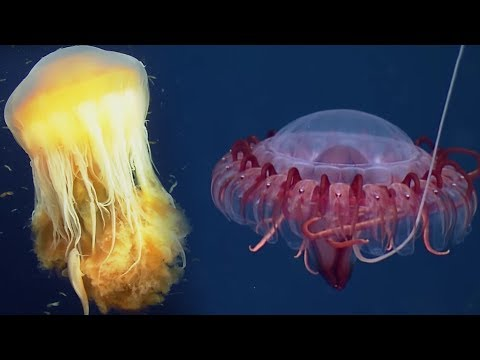 Deep Ocean: 10 Hours of Relaxing Oceanscapes | BBC Earth